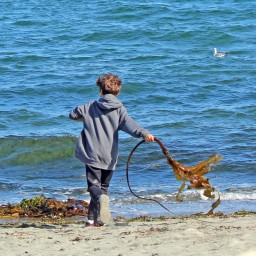 boy at the beach by the ocean with kelp seaweed