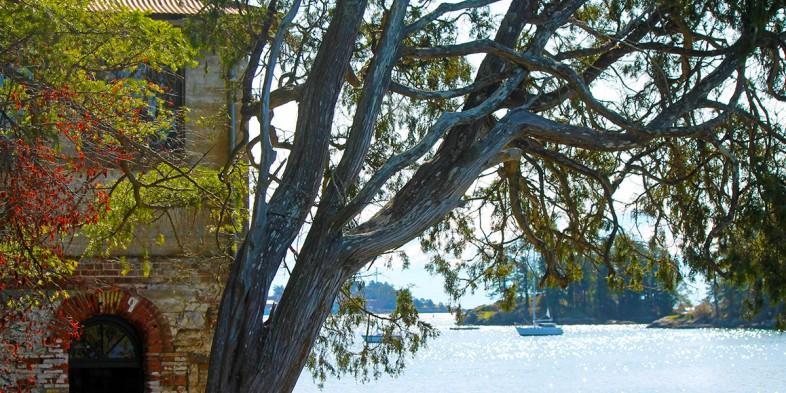 Cole Island tree