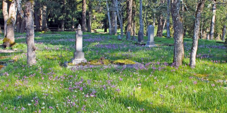 Pioneer Cemetery wildflowers