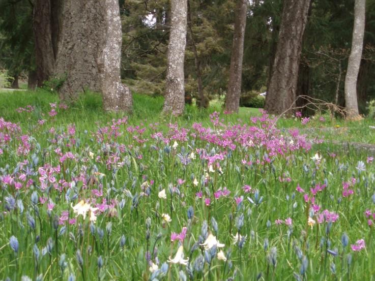 Field of Wildflowers at Pioneer Cemetery