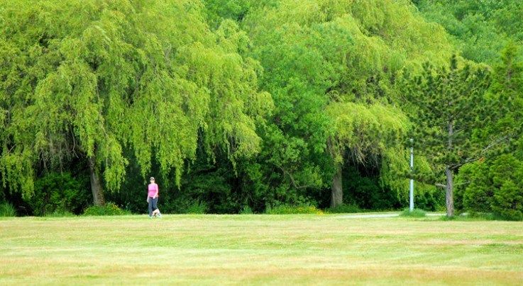 lady walking dog under weeping willows at Colwood Creek Park