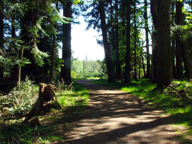 forest trail with huge trees